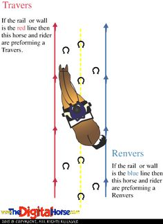 Lateral Work - Travers - The Crystal System Dressage Horseback Riding Tips, Horse Riding Tips, Horse Tips, Horse Exercises, Training Exercises, Dressage Horses, Draft Horses, Riding Lessons, White Horses