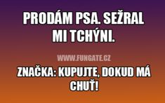 FunGate.cz Funny Moments, Comedy, Writer, Funny Pictures, Jokes, Lol, Design, Quotation, Funny Pics