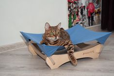 Dog Hammock, Pet Gifts, Dog Bed, Small Dogs, Paper Shopping Bag, Color Schemes, Funny, Etsy, Gatos