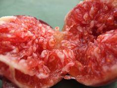 [2012.7.16] 새콤달콤 붉은 석류 X10   붉은 빛이 탐스러운 새콤달콤한 석류입니다.    미녀는 석류를 좋아해♬ 라는 CM송이 유행하기도 했었죠?    비타민C를 다량 함유한 석류는 피부와 골다공증에 좋다고 합니다.    <사진정보>    촬영 모드 - Aperture-Priority AUTO   감도 - ISO 200   다이나믹 레인지 - 100%   조리개 -  f/3.2   셔터스피드 - 1/950   초점거리 - 7.1mm   화이트 밸런스 - Auto   필름 시뮬레이션 - PROVIA    http://blog.naver.com/fujifilm_x/150136709486