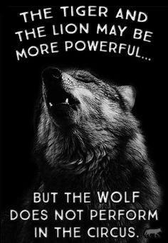 8 Best Lone Wolf Quotes Images Thoughts Lone Wolf Quotes Messages
