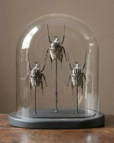 Goliath beetle dome