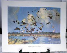 "Vintage Sir Peter Scott Litho Duck Print - ""Black Ducks in the Sunshine"" - 1952 - SOLD!"