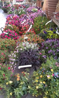 Yay for hanging baskets!