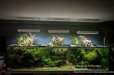 Favourites: Germanys biggest Aquascaping-Tank by Mathias Schneider This impressing Tank has about 2300 Liter and nice emersed Parts as well!