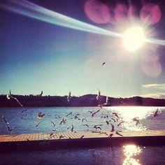 #Seagulls (presso Lido della Schiranna)
