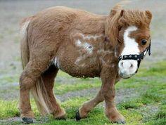 horse pics | Cute Miniature Horse Koda : Birds Animals