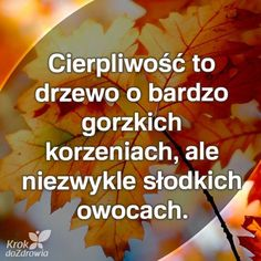 Motto, Poland, Mindfulness, Inspirational Quotes, Thoughts, Humor, Madonna, Quote, Polish Sayings