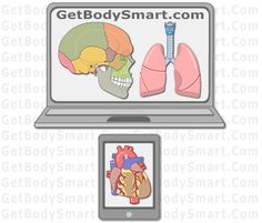 GetBodySmart: Interactive Tutorials and Quizzes On Human Anatomy and Physiology