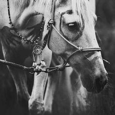 Equestrian Bitch tribal