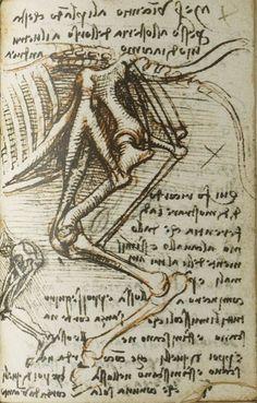 Studies of comparative anatomy