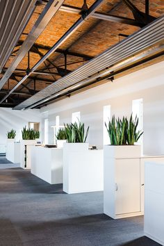 Sideboard greening: natural privacy in the open-plan office # gruß … - Bepflanzung Corporate Office Design, Office Interior Design, Office Interiors, Industrial Office Space, Natural Interior, Office Plants, Building A New Home, Open Plan, Sideboard