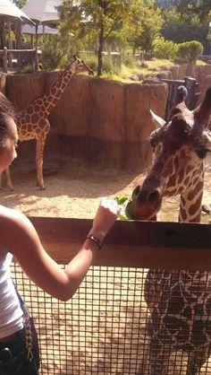 Dallas Zoo .