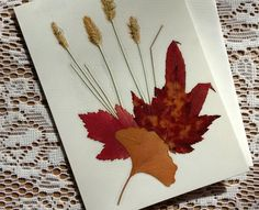 GREETING CARD Pressed Fall Foliage Colorful by MyHumbleJumble