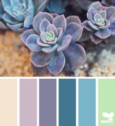 Succulents have a range of hues to be inspired by. Wedding colors, wedding succulents