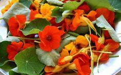 Capuchinha (tropaeolum majus) (flor-do-sangue e agrião-do-méxico)  Fáceis de cultivar, elas trazem uma explosão de cor a qualquer salada. Elas são boas recheadas, cristalizadas ou como ornamento. Possuem um gosto ligeiramente apimentado. As sementes podem até ser usadas para substituir pimentas tradicionais. A planta inteira é comestível.  Vida: Anual/bienal Germinação 5 a 14 dias Ciclo até floração (dias): 110  Floresce entre julho e outubro