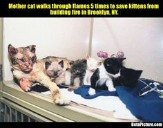 Mother Cat Saves Kittens From Fire. This Mother Cat Is My Hero.