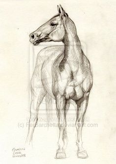 Horse Study 2. by ~FerBarchetta on deviantART