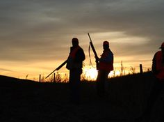 upland bird hunting - Google Search