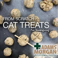 Thanksgiving is just a week away, start your holiday preparation early and include your favorite feline in the celebration with these home-made cat treats.