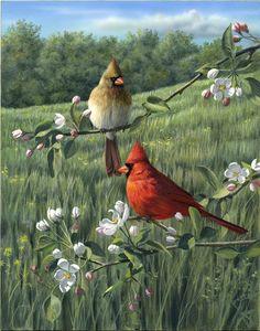 Cardinals and Prairie by artist Robert Hautman. Pretty Birds, Beautiful Birds, Animals Beautiful, Cardinal Birds, Bird Illustration, Bird Pictures, Wildlife Art, Wild Birds, Bird Prints