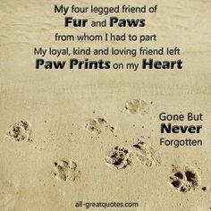 Pet Grief