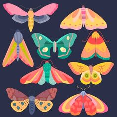 Colourful Moth Moths Clip Art Clipart Set by CollectiveCreation Animal Drawings, Art Drawings, Pencil Drawings, Colorful Moths, Tableaux D'inspiration, Illustrations, Illustration Art, Butterfly Illustration, Insect Art