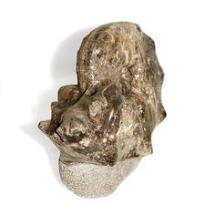 Goulmima Ammonite