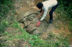The Olmec colossal heads are at least seventeen monumental stone representations of human heads sculpted from large basalt boulders. The heads date from at least before 900 BC and are a distinctive feature of the Olmec civilization of ancient Mesoamerica. Colossal Head #10. San Lorenzo. source
