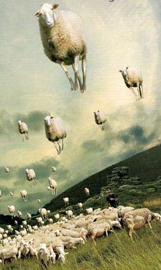 Counting Sheep ❤