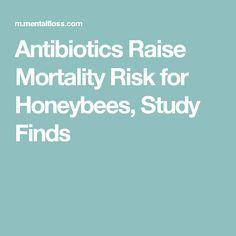 Antibiotics Raise Mortality Risk for Honeybees, Study Finds