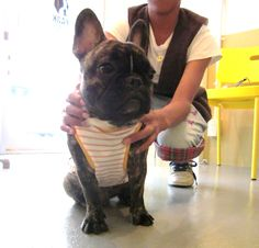 Mr. Buu, French Bulldog