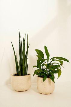 Ivory 15cm Diameter Plant Pot