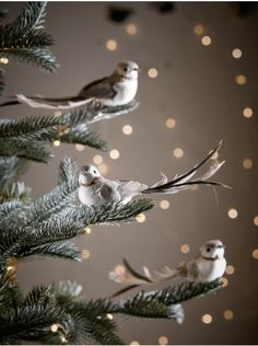 Exquisitely detailed and beautifully elegant, each piece in our set of three bird clips features a petite body, sweet face and sweeping, real feather tail. Perfect for adorning your Christmas tree, each bird is finished in soft white and grey Grey Christmas Tree, Merry Little Christmas, Christmas Baubles, Rustic Christmas, Xmas, Christmas Trends, Christmas Fashion, Christmas Inspiration, Christmas 2017