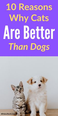 Discover 10 reasons why cats are better than dogs. Whether you see yourself as a cat or a dog person this article will open your eyes! Funny Cat Photos, Funny Cat Videos, Introducing A New Cat, Training A Kitten, Best Cat Memes, Pedigree Cats, Cat Behavior Problems, First Time Cat Owner, Indoor Cats