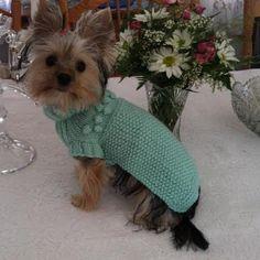 Mint green sweater Dog clothesdog sweater dog jumper by CUTIEDOG, £13.50