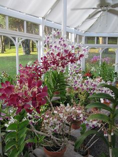 Orchid greenhouse at the Lodge at Koele - via travelswithtwo