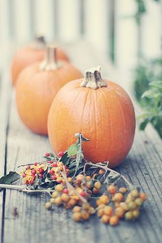 Pumpkins and bittersweet