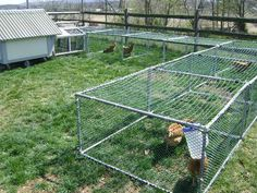 Raising chickens in your backyard or garden is great idea to get the freshest eggs and healthy meat. Best Egg Laying Chickens, Raising Backyard Chickens, Backyard Chicken Coops, Chicken Coop Plans, Diy Chicken Coop, Farm Chicken, Chicken Wire, Chicken Tunnels, Rustic Garden Decor