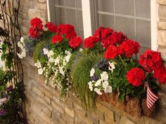 Full sun red white and blue window box