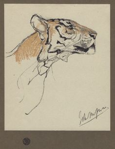 Tiger Sketch, Arts And Crafts Movement, Animal Drawings, Drawing Animals, Animal Sketches, Famous Artists, Painting & Drawing, Sketch Drawing, Art Photography