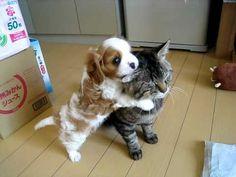 Gato con paciencia infinita con perrito.
