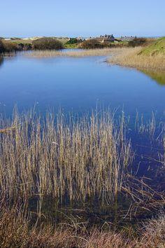 Le printemps arrive à La Torche, sur les étangs littoraux