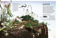 """Für den """"stern"""" hat KB im Mai 2012 vier Infografiken zum Leben einer Wiese in den vier Jahreszeiten erstellt. Hier: der Winter"""
