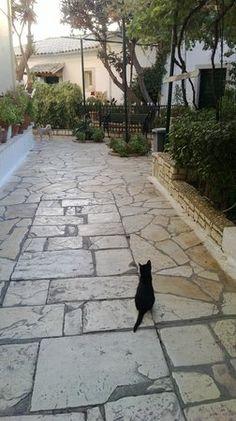 TripAdvisor cats of Corfu | One of many, many cats - Foto de Paleokastritsa Monastery, Corfu ...