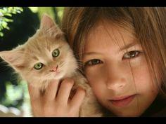 Best TOP 10 Kids and Kittens - Most Cute Kittens: Video Cats Compilation https://www.youtube.com/watch?v=KhK9I1nJClA&list=PLC_HjotBFMpPZJgePrr5eT-ii6FGhaW6r