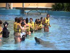 Dolphinaris Riviera Maya