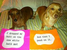 Dachshund dog shaming