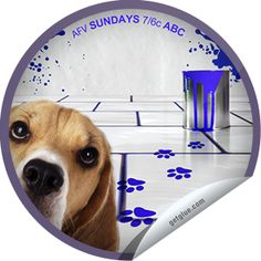 AFV: Funderwear, Name that Sound, and A Salute to Dogs Who Tilt Their Heads America's Funniest Home Videos, America Funny, Tilt, Names, Entertaining, Stickers, Dogs, Pet Dogs, Doggies