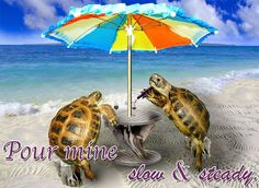 """Tortoises On A Beach With Wine, """"Pour mine slow and steady. Tortoises, Mens Tees, Turtle, Great Gifts, Graphic Design, Wine, Beach, Poster, Shopping"""